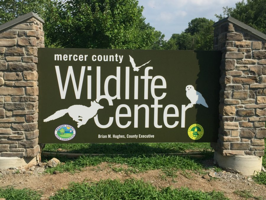 Pennington Library Hosts Supply Drive for Wildlife Center